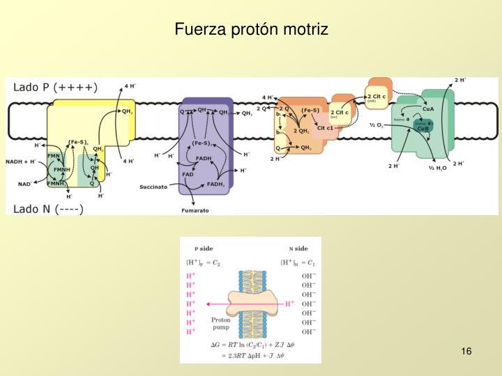 Fuerza protón motriz
