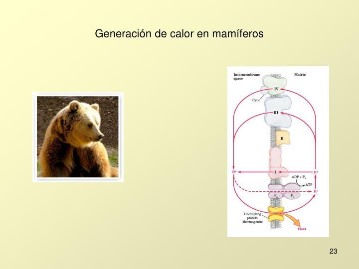 Generación de calor en mamíferos