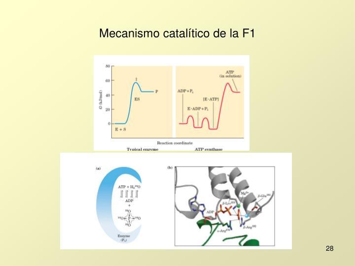 Mecanismo catalítico de la F1