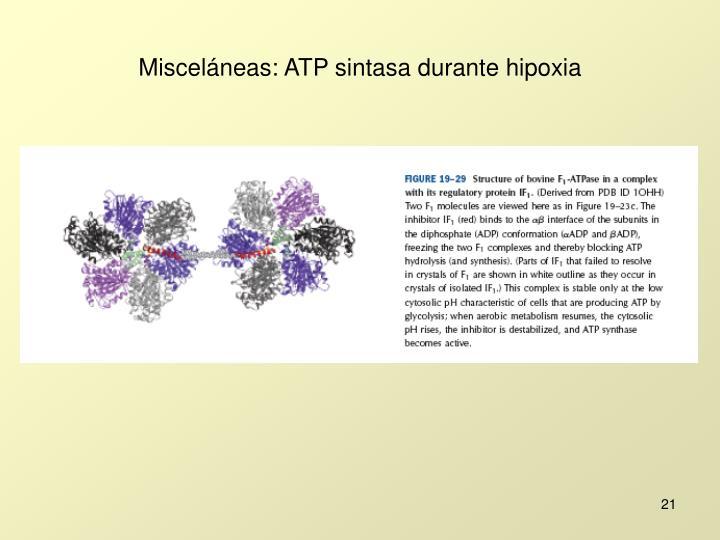 Misceláneas: ATP sintasa durante hipoxia