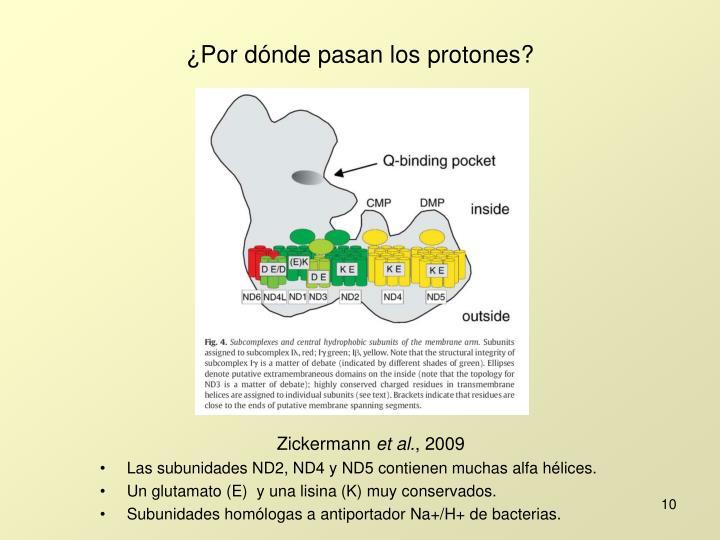 ¿Por dónde pasan los protones?