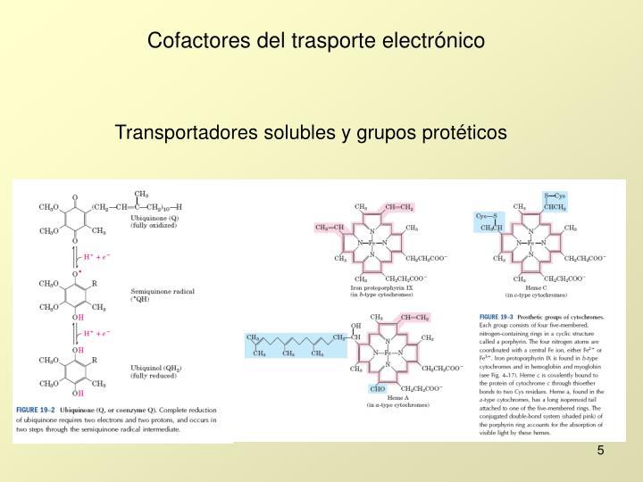 Transportadores solubles y grupos protéticos