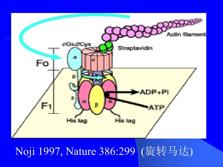 Noji 1997, Nature 386:299  (
