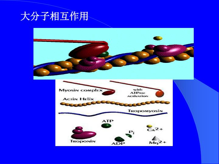 大分子相互作用