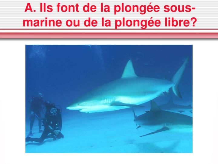 A. Ils font de la plongée sous-marine ou de la plongée libre?