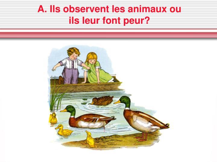 A. Ils observent les animaux ou