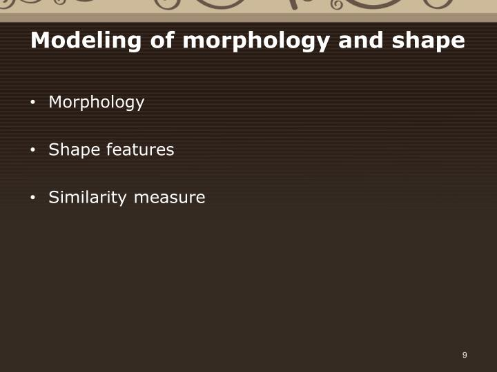 Modeling of morphology and shape