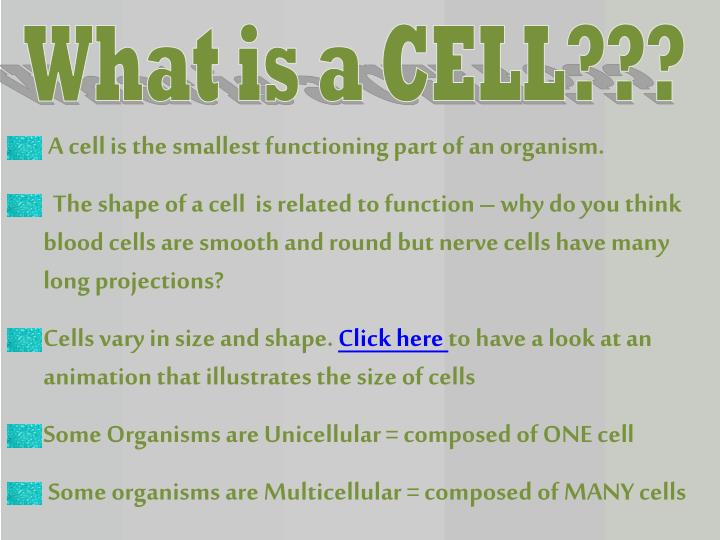 What is a CELL???