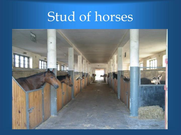 Stud of horses