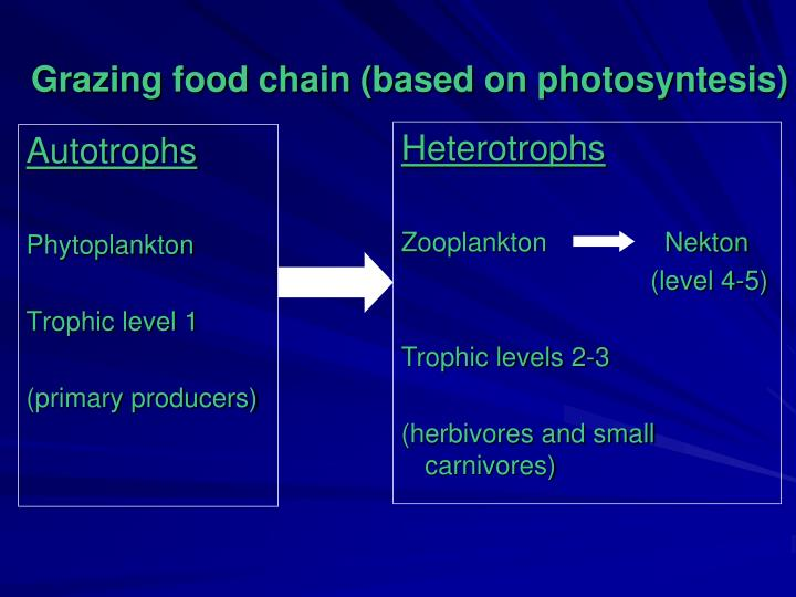 Grazing food chain (based on photosyntesis)