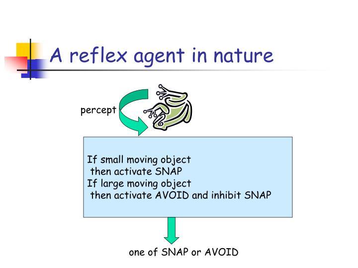 A reflex agent in nature