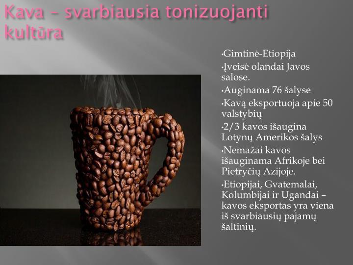 Kava – svarbiausia tonizuojanti kultūra