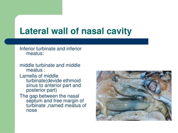 Lateral wall of nasal cavity