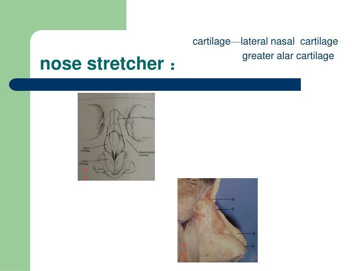 nose stretcher