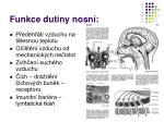 funkce dutiny nosn
