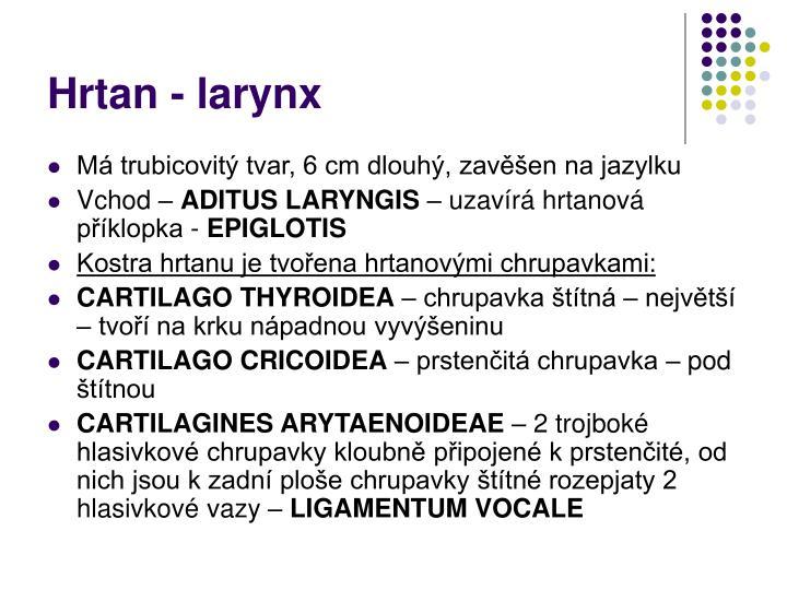 Hrtan - larynx