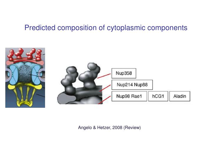Predicted composition of cytoplasmic components