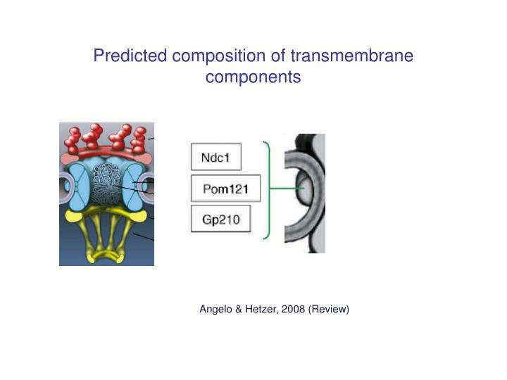 Predicted composition of transmembrane components