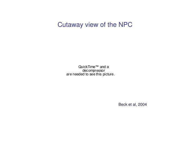Cutaway view of the NPC