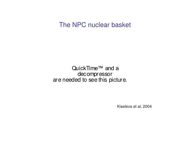 The NPC nuclear basket