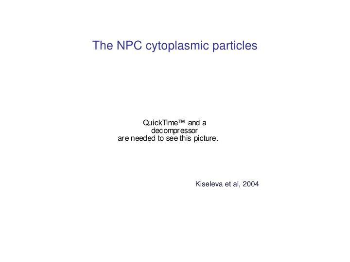 The NPC cytoplasmic particles