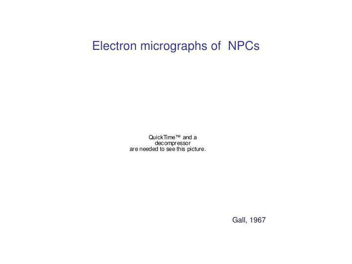 Electron micrographs of  NPCs