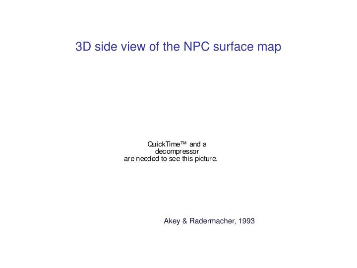 3D side view of the NPC surface map