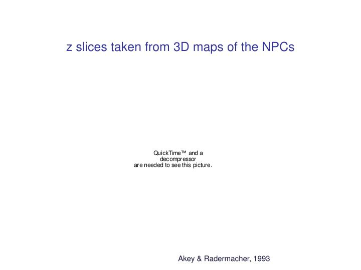 z slices taken from 3D maps of the NPCs