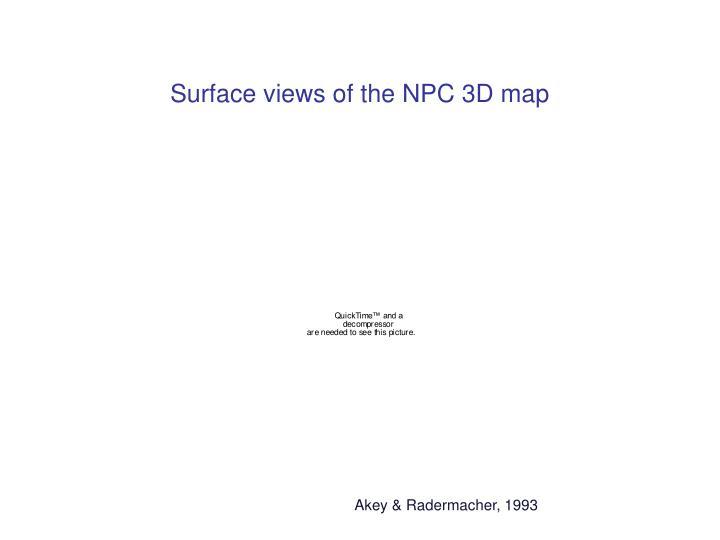 Surface views of the NPC 3D map