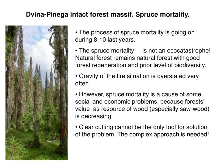 Dvina-Pinega intact forest massif