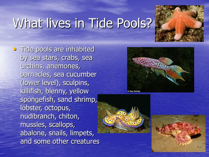 What lives in Tide Pools?
