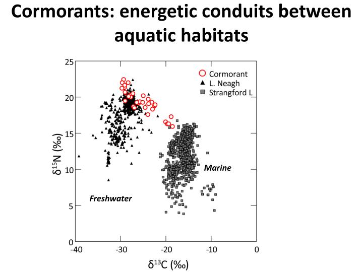 Cormorants: energetic conduits between aquatic habitats