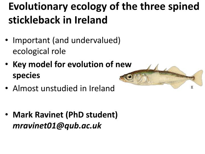 Evolutionary ecology of the three spined stickleback in Ireland
