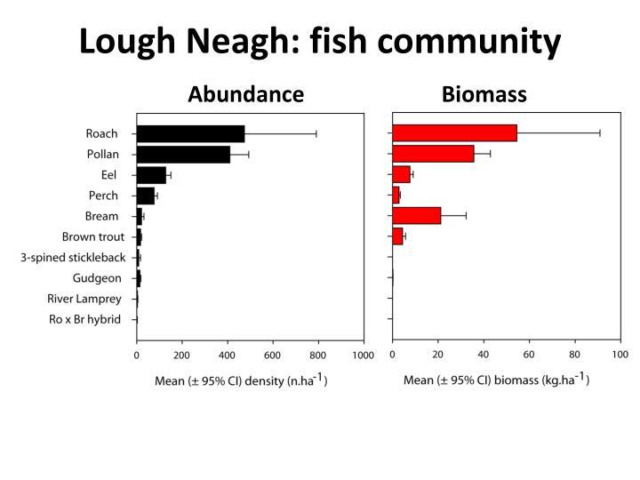 Lough Neagh: fish community