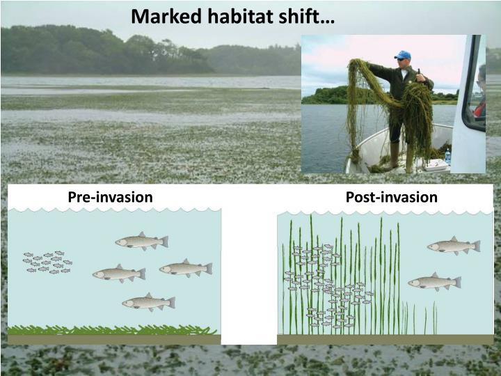 Marked habitat shift…