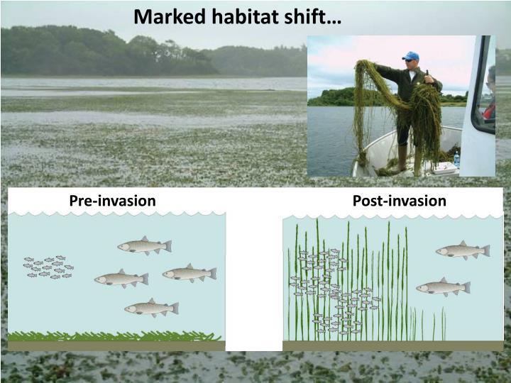 Marked habitat shift…