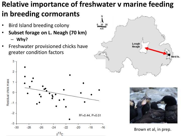 Relative importance of freshwater v marine feeding in breeding cormorants