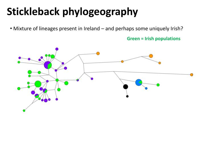Stickleback phylogeography