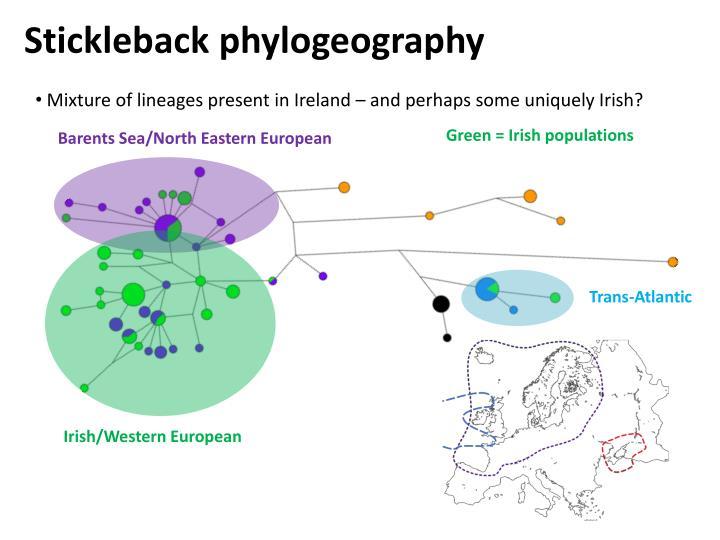Stickleback phylogeography