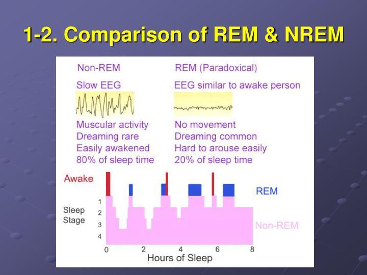 1-2. Comparison of REM & NREM
