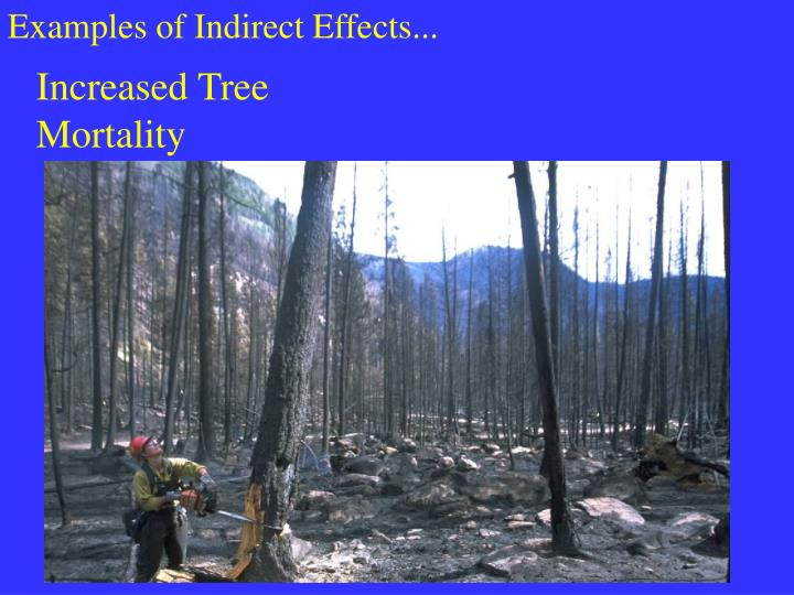 Examples of Indirect Effects...