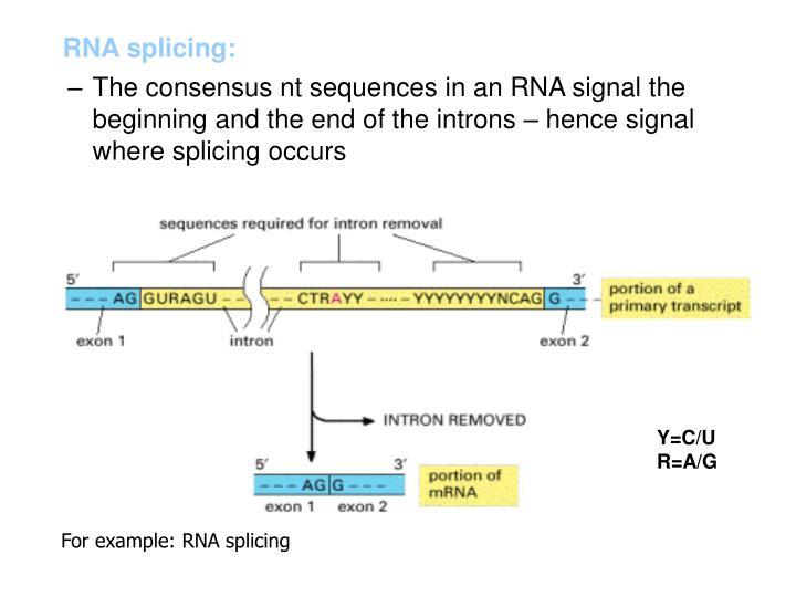 RNA splicing: