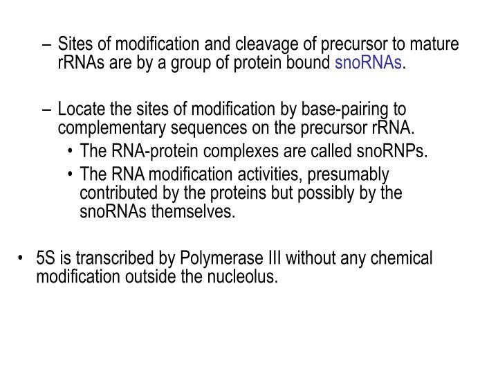 Sites of modification and cleavage of precursor to mature rRNAs are by a group of protein bound
