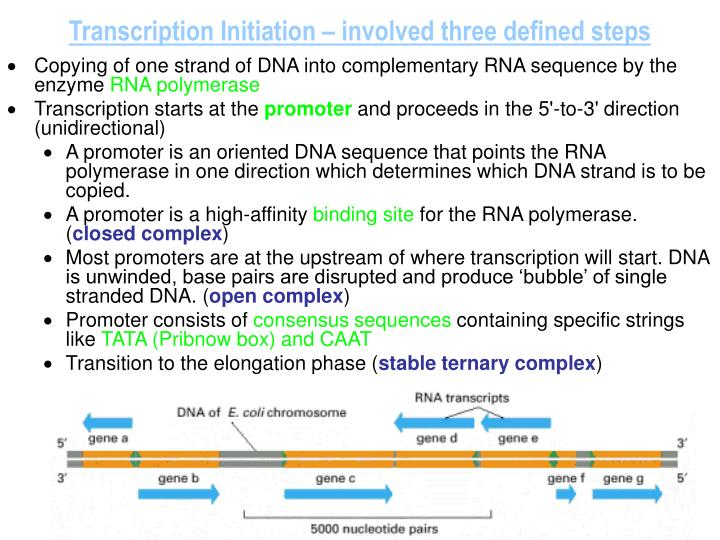 Transcription Initiation – involved three defined steps