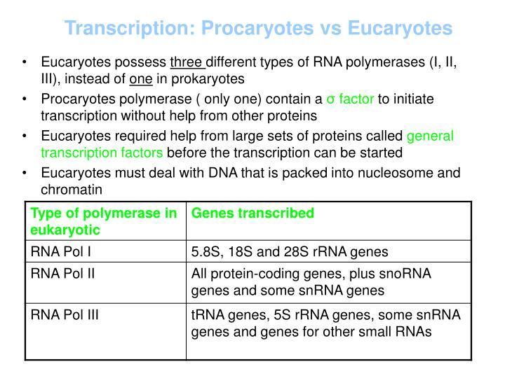 Transcription: Procaryotes vs Eucaryotes