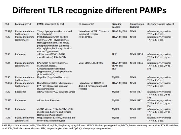 Different TLR recognize different PAMPs