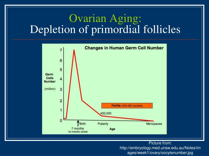 Ovarian Aging: