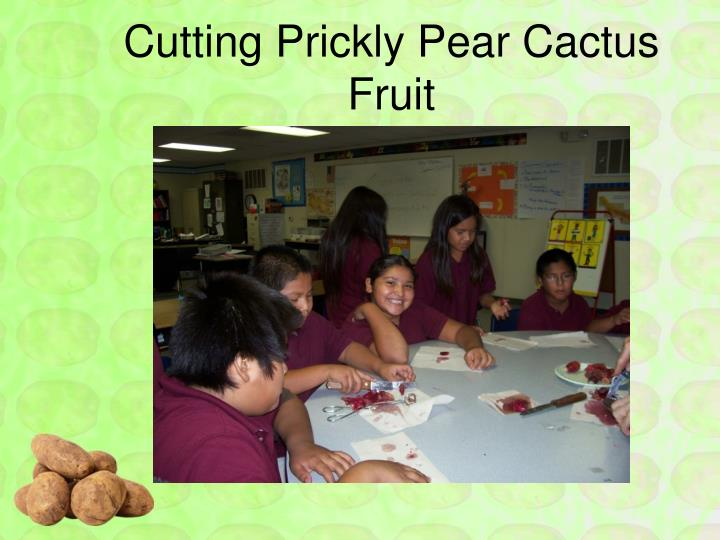Cutting Prickly Pear Cactus Fruit