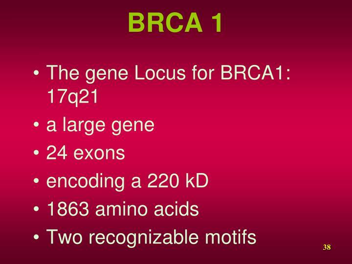 BRCA 1