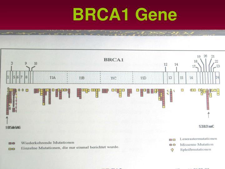 BRCA1 Gene
